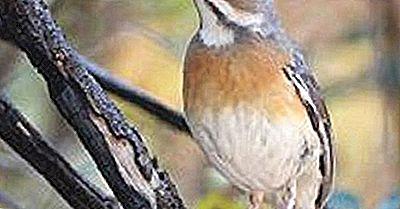 Einheimische Vögel Von Mosambik