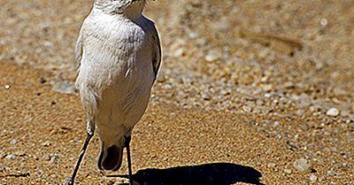 Einheimische Vögel Von Namibia
