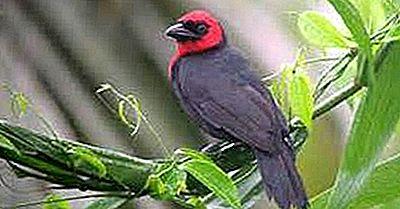 De Inheemse Vogels Van Nigeria