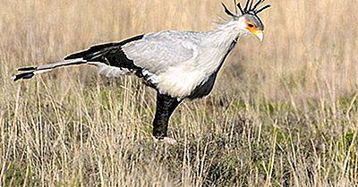 Os Pássaros Nativos Da Zâmbia