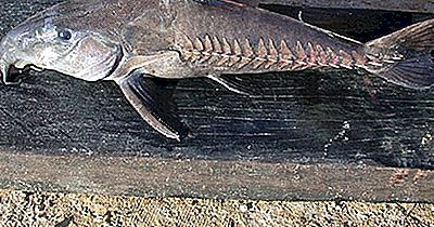 Peixe Nativo Do Equador