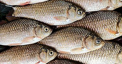 Especies De Peces Nativos De China