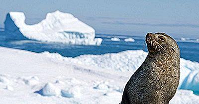 Mamíferos Nativos Da Antártida
