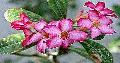 Especies Nativas De Plantas De Chad