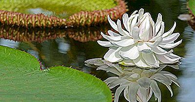 Einheimische Pflanzen Von Argentinien