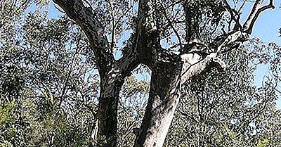 Plantas Nativas Da Austrália