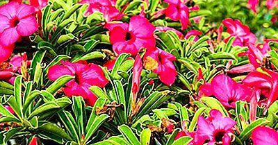 Native Plants Of Saudi Arabia