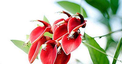 Einheimische Pflanzen Von Uruguay