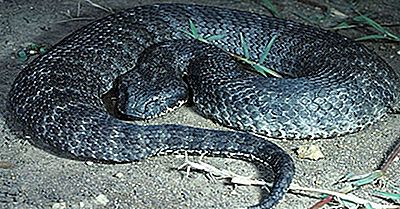Reptiles Indigènes D'Australie