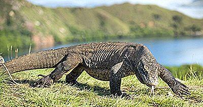 Reptiles Nativos De Indonesia