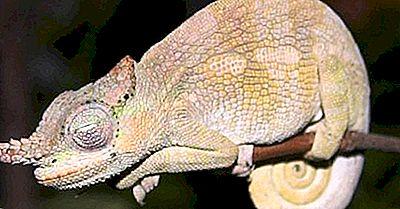 Native Reptiles Of Kenya