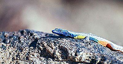 Gebürtige Reptilien Von Südafrika