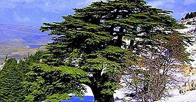 Riserve Naturali E Aree Protette In Libano