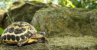 As Nove Espécies De Tartarugas À Beira Da Extinção