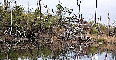 L'Okefenokee Blackwater Swamp