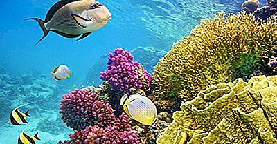 Växter Och Djur Som Finns I Coral Reef Ecosystems