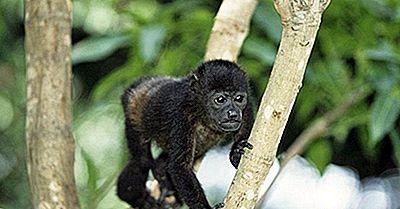 Reserva Da Biosfera Do Rio Plátano, Honduras