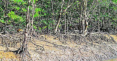 Los Humedales Ramsar De Importancia Internacional En Malasia