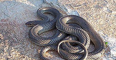 Reptilien Von Kasachstan