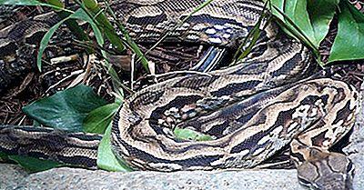 Reptiles De Madagascar