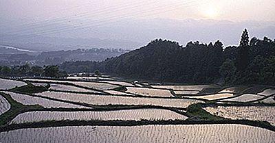 Os Arrozais Da Ásia: Importância Cultural, Econômica E Culinária