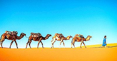 As Sete Espécies Existentes Da Família Camelidae