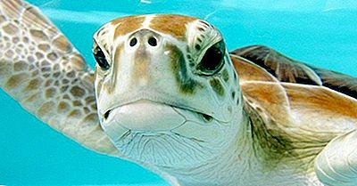 Las Siete Especies De Tortugas Marinas Que Viven En Los Océanos De Nuestro Planeta