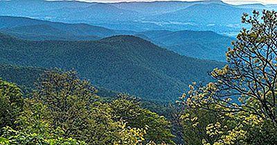 Los Bosques Nacionales Del Sur De Los Estados Unidos