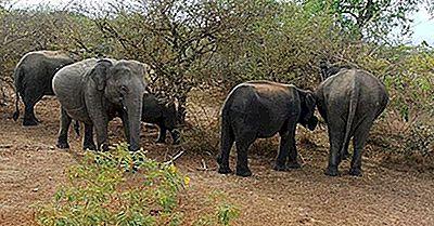 Parques Nacionales De Sri Lanka: Papel En La Conservación De La Vida Silvestre