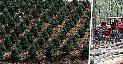 Nachhaltige Nutzung In Der Forstwirtschaft Und Natural Resource Management