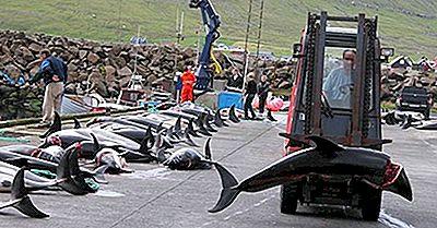 Taiji Drive Hunt - Las Especies De Delfines Y Ballenas Más Afectadas