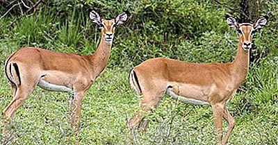 Mammiferi In Pericolo Della Tanzania