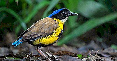 Las Aves Más Amenazadas De Tailandia