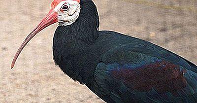 Aves Endémicas Amenazadas De Sudáfrica