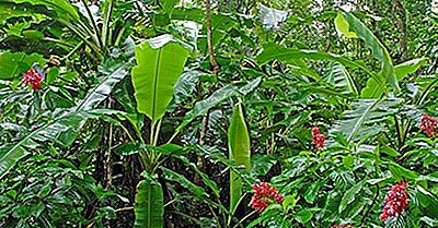 Plantes Endémiques Menacées Du Costa Rica