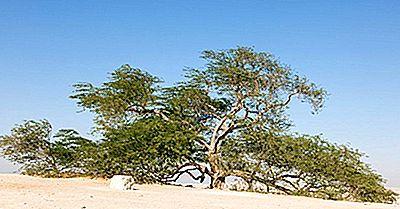 Árbol De La Vida - Maravillas Naturales De Bahrein
