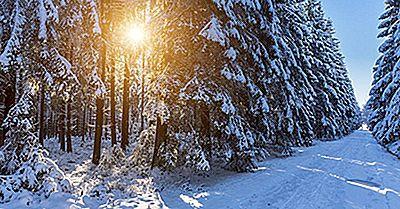 Tipos De Bosques Encontrados En Canadá