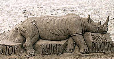 Tipi Di Rinoceronti Che Vivono In Tutto Il Mondo Oggi