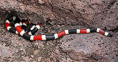 I Serpenti Velenosi Del New Mexico