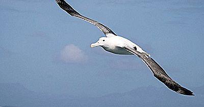 Faits Sur Les Albatros Errants