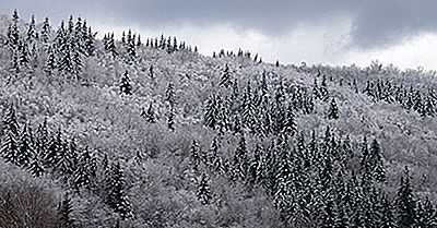 O Que E Onde Estão As Florestas De Taiga?