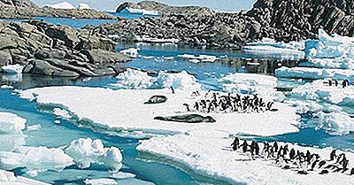Que Animais Vivem Na Antártica?