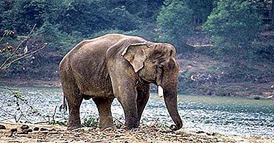 Quali Animali Vivono In India?