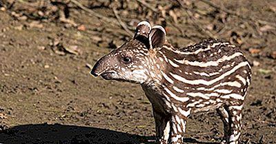 ¿Qué Animales Viven En América Del Sur?