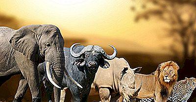 Was Sind Die Großen 5 Tiere?