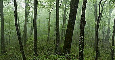 Vad Är Skillnaderna Mellan Primära Och Sekundära Skogar?
