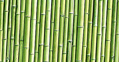 Quali Sono Le Diverse Applicazioni Di Bambù?