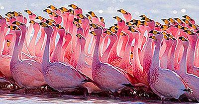 ¿Qué Son Los Pájaros Vadeando?