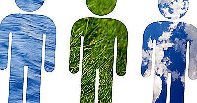 Quali Effetti Hanno Gli Esseri Umani Sull'Ambiente?