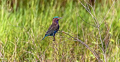 O Que É Uma Área De Aves Endêmicas?